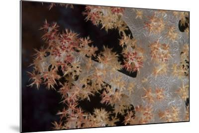 Close-Up of Tree Coral on a Fijian Reef-Stocktrek Images-Mounted Photographic Print