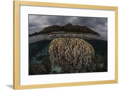 Fragile Corals Grow in Komodo National Park, Indonesia-Stocktrek Images-Framed Photographic Print