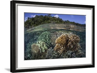 A Diverse Array of Reef-Building Corals in Raja Ampat, Indonesia-Stocktrek Images-Framed Photographic Print