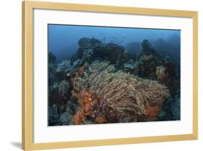 A Strong Current Sweeps across a Reef Slope in Indonesia-Stocktrek Images-Framed Photographic Print