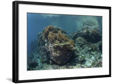 A Healthy Coral Reef Thrives in Komodo National Park, Indonesia-Stocktrek Images-Framed Photographic Print