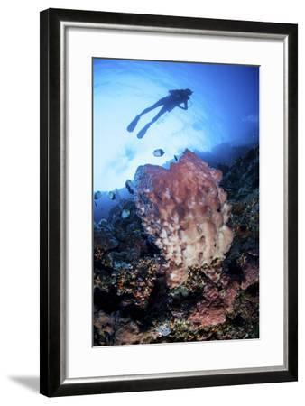 A Large Barrel Sponge Grows on a Reef Dropoff Near Sulawesi, Indonesia-Stocktrek Images-Framed Photographic Print