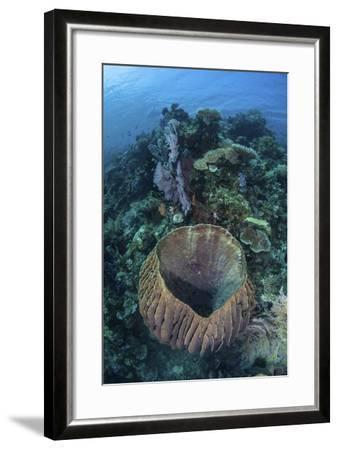 A Massive Barrel Sponge Grows on a Reef Near Alor, Indonesia-Stocktrek Images-Framed Photographic Print