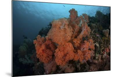 Vibrant Soft Corals Thrive on a Deep Reef in Indonesia-Stocktrek Images-Mounted Photographic Print