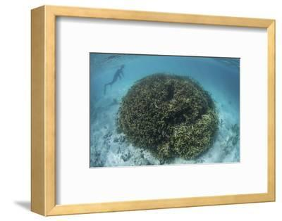 A Snorkeler Explores a Shallow Lagoon in a Remote Part of Raja Ampat-Stocktrek Images-Framed Photographic Print