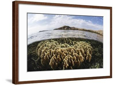 A Fire Coral Colony Grows in Komodo National Park-Stocktrek Images-Framed Photographic Print