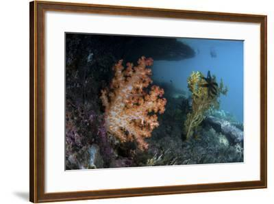 A Soft Coral Colony and Invertebrates in Raja Ampat, Indonesia-Stocktrek Images-Framed Photographic Print