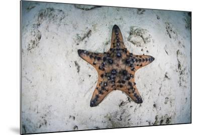 A Colorful Chocolate Chip Sea Star on the Seafloor of Indonesia-Stocktrek Images-Mounted Photographic Print