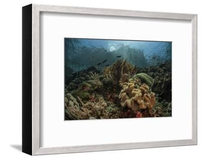 A Beautiful Coral Reef Grows in Komodo National Park, Indonesia-Stocktrek Images-Framed Photographic Print