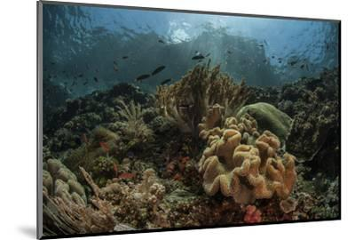 A Beautiful Coral Reef Grows in Komodo National Park, Indonesia-Stocktrek Images-Mounted Photographic Print