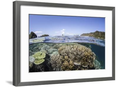 A Beautiful Coral Reef in Raja Ampat, Indonesia-Stocktrek Images-Framed Photographic Print