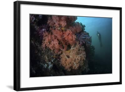 Soft Corals and Invertebrates Grow on a Deep Reef in Indonesia-Stocktrek Images-Framed Photographic Print