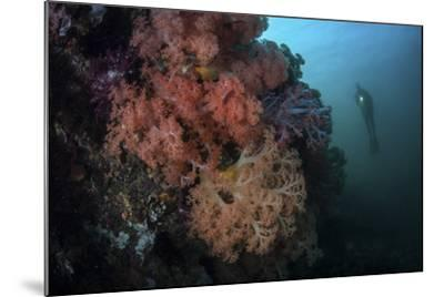 Soft Corals and Invertebrates Grow on a Deep Reef in Indonesia-Stocktrek Images-Mounted Photographic Print