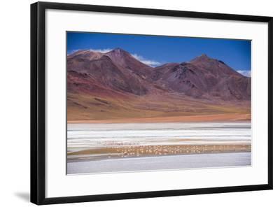 Flamingos at Laguna Hedionda, a Salt Lake Area in the Altiplano of Bolivia, South America-Matthew Williams-Ellis-Framed Photographic Print