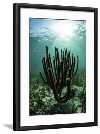 Gorgonians Grow on a Shallow Reef Off the Coast of Belize-Stocktrek Images-Framed Photographic Print