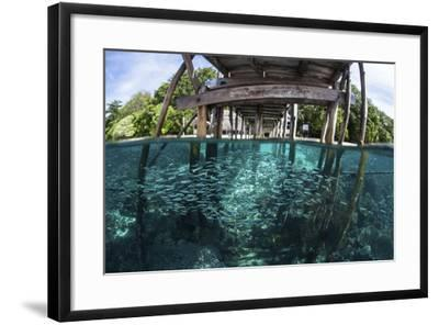 A School of Silversides Beneath a Wooden Jetty in Raja Ampat, Indonesia-Stocktrek Images-Framed Photographic Print