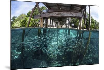 A School of Silversides Beneath a Wooden Jetty in Raja Ampat, Indonesia-Stocktrek Images-Mounted Photographic Print