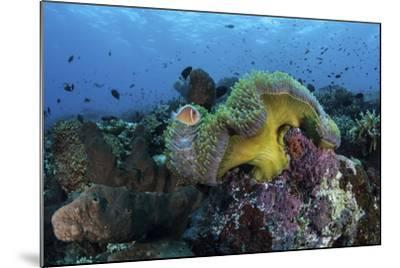 A Pink Anemonefish Swims Near its Host Anemone-Stocktrek Images-Mounted Photographic Print
