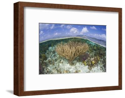 Gorgonians and Reef-Building Corals Near the Blue Hole in Belize-Stocktrek Images-Framed Photographic Print