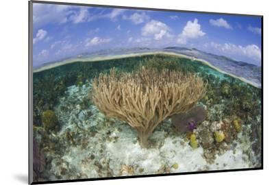 Gorgonians and Reef-Building Corals Near the Blue Hole in Belize-Stocktrek Images-Mounted Photographic Print