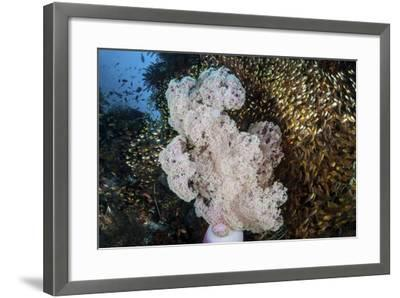 Golden Sweepers Surround a Soft Coral Colony in Indonesia-Stocktrek Images-Framed Photographic Print