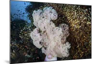 Golden Sweepers Surround a Soft Coral Colony in Indonesia-Stocktrek Images-Mounted Photographic Print