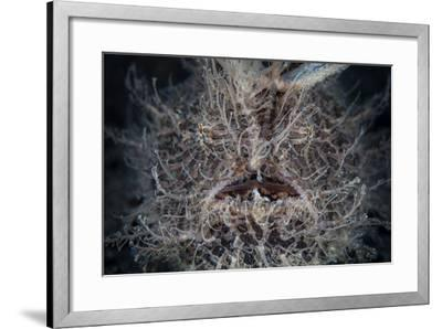 Front View of a Hairy Frogfish-Stocktrek Images-Framed Photographic Print