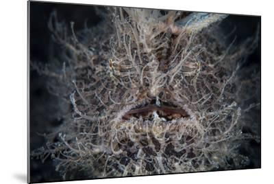 Front View of a Hairy Frogfish-Stocktrek Images-Mounted Photographic Print