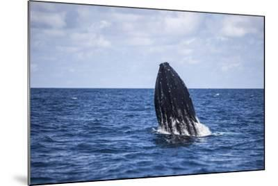 A Humpback Whale Begins to Breach Out of the Atlantic Ocean-Stocktrek Images-Mounted Photographic Print