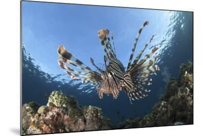 Facial View of a Lionfish Showing its Spines-Stocktrek Images-Mounted Photographic Print