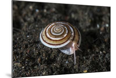 A Live Sundial Shell Crawls across the Seafloor-Stocktrek Images-Mounted Photographic Print
