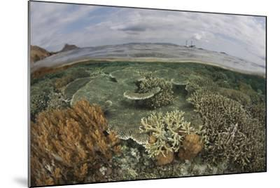 A Beautiful Reef Grows in Komodo National Park, Indonesia-Stocktrek Images-Mounted Photographic Print