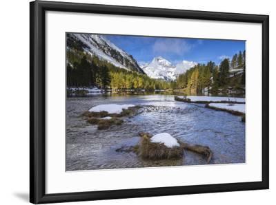 Colorful Trees and Snowy Peaks Frame Lai Da Palpuogna, Bergen, Canton of Graubunden-Roberto Moiola-Framed Photographic Print