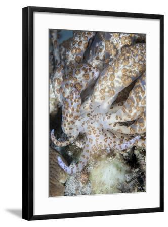 A Solar-Powered Nudibranch Crawls across the Seafloor-Stocktrek Images-Framed Photographic Print