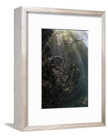 Sunlight Descends Underwater and over a Set of Whip Corals-Stocktrek Images-Framed Photographic Print