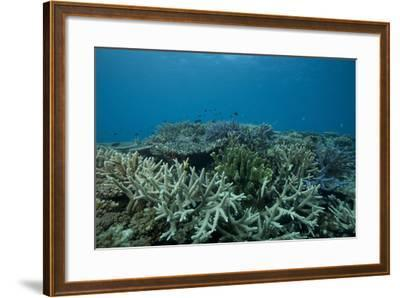 Healthy Corals Cover a Reef in Beqa Lagoon, Fiji-Stocktrek Images-Framed Photographic Print