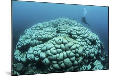 Corals are Beginning to Bleach on a Reef in Indonesia-Stocktrek Images-Mounted Photographic Print