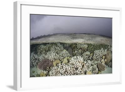A Fragile Coral Reef Grows in Shallow Water in the Solomon Islands-Stocktrek Images-Framed Photographic Print