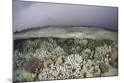 A Fragile Coral Reef Grows in Shallow Water in the Solomon Islands-Stocktrek Images-Mounted Photographic Print