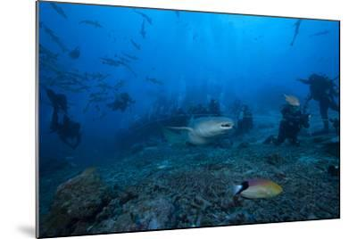 A Large Tawny Nurse Shark Swims Past Divers at the Bistro Dive Site in Fiji-Stocktrek Images-Mounted Photographic Print