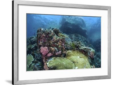 A Beautiful Coral Reef Thrives on an Underwater Slope in Indonesia-Stocktrek Images-Framed Photographic Print