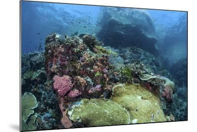 A Beautiful Coral Reef Thrives on an Underwater Slope in Indonesia-Stocktrek Images-Mounted Photographic Print