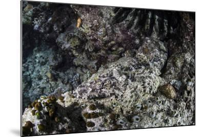 A Crocodilefish Lays on the Seafloor in the Solomon Islands-Stocktrek Images-Mounted Photographic Print