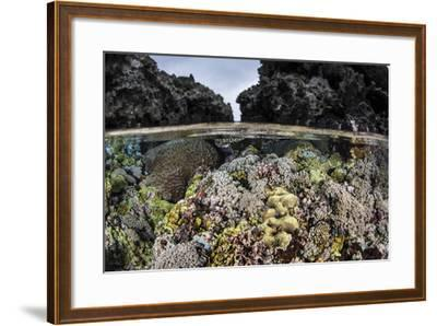 A Colorful Coral Reef Grows in Shallow Water in the Solomon Islands-Stocktrek Images-Framed Photographic Print