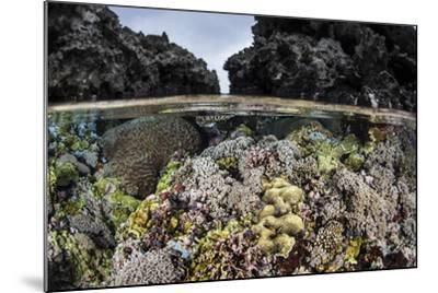 A Colorful Coral Reef Grows in Shallow Water in the Solomon Islands-Stocktrek Images-Mounted Photographic Print