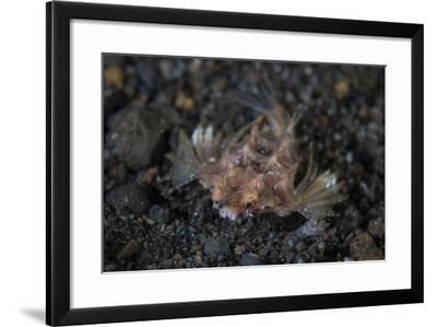 A Dragon Seamoth Crawls across the Sandy Seafloor-Stocktrek Images-Framed Photographic Print