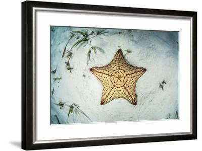 A West Indian Starfish on the Seafloor in Turneffe Atoll, Belize-Stocktrek Images-Framed Photographic Print