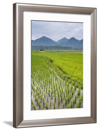 Rice Paddy Fields, Bukittinggi, West Sumatra, Indonesia, Southeast Asia, Asia-Matthew Williams-Ellis-Framed Photographic Print