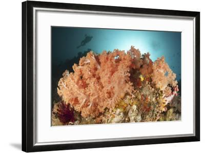 Diver Looks on at a Colorful Komodo Seascape, Indonesia-Stocktrek Images-Framed Photographic Print