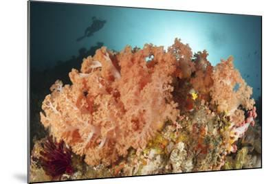 Diver Looks on at a Colorful Komodo Seascape, Indonesia-Stocktrek Images-Mounted Photographic Print